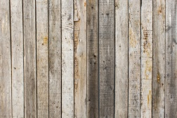 bg_rotted_wood